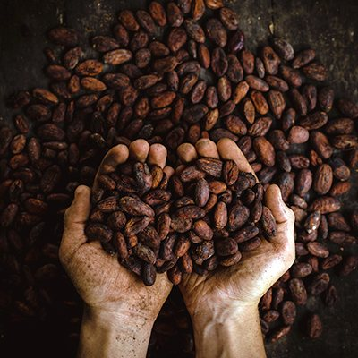 bean chocolate gourmandise